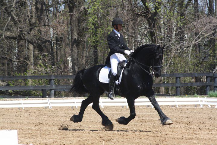 Dressage Shows at Columbia Horse Center